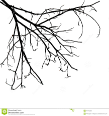 branches isolated on white background stock image image 26119007