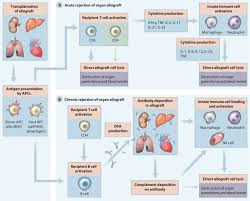advances and challenges in immunotherapy for solid organ and