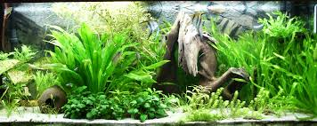 essential advice for starting a home aquarium boneblogger