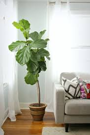 Indoor Plant Design by Best 25 Big Leaf Plants Ideas On Pinterest Big Indoor Plants