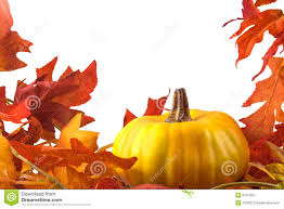 thanksgiving stock image image of colorful leaf 6737059