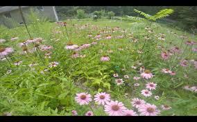 flowers and flower gardens dan u0026 sherree u0026 patrick