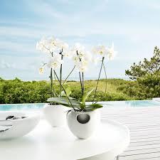 Eva Vase Vase Eva Solo Self Watering Orchid Pot Relaxtribe