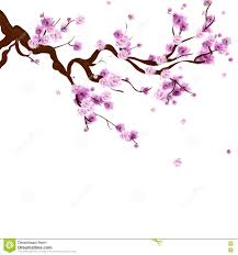 watercolor background with blossom cherry tree branch ha