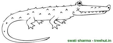 crocodile coloring