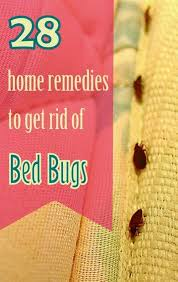 natural bed bug remedies 28 effective home remedies to get rid of bed bugs