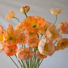 Peach Flowers The 25 Best Poppy Ideas On Pinterest Poppies Watercolor