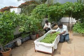terrace gardening tips to create wonderful open terrace garden