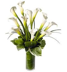 memorial flowers 18 iris flower gifts gardensonline iris sibirica diademas