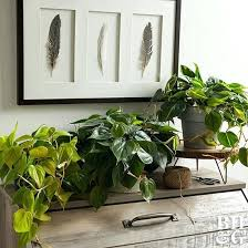 house plants no light tall indoor plants low light our guide to the best indoor trees