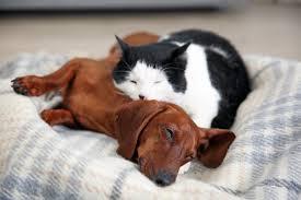 gerüche die katzen nicht mö hund und katze so klappt die eingewöhnungszeit