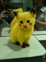Pikachu Halloween Costume Kids 19 Images Ridiculous Possibly Awesome Halloween