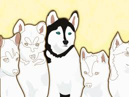 how to name a husky 9 steps with pictures wikihow