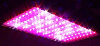 what are the best led grow lights for weed best led grow lights available in the market