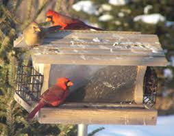 is there such a thing as too many bird feeders watching