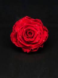 D Roses Rose D U0027anvers