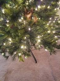 29 cats who just want to help you decorate your tree