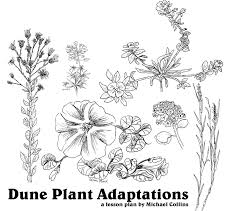 dune plant adaptaptions
