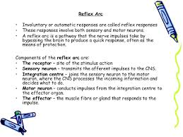 What Is A Reflex Action Example Fa U0026p Muscles And Nerves