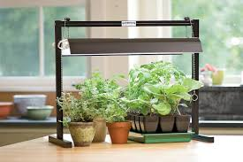 fluorescent lighting best fluorescent light for plants indoor