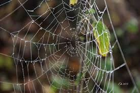 17 Best Images About Spider - 17 best mrekullite e natyres images on pinterest chandelier