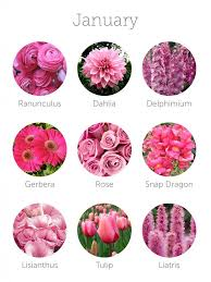 Birth Flower Of January - best 25 january flower ideas on pinterest birth month stones