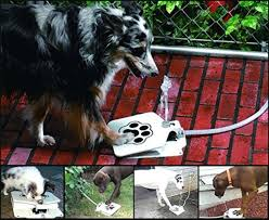 australian shepherd ipod 5 case upgrade version outdoor dog water fountain pet step on drinking
