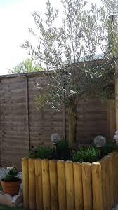 garden pots australia photo album best 25 tree planters ideas on pinterest garden ideas with tree
