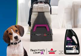 Renting A Rug Cleaner Petsmart Coupon 10 Off Pawsitively Clean Bissell Rental Woof