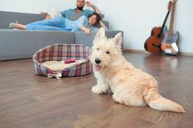 the best flooring for dogs