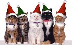 cat christmas monsignor s christmas cats