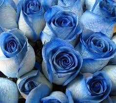 white blue roses san diego ca florist flowers flower delivery la jolla