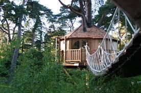 cool tree houses lofty retreat tree house blue forest
