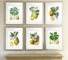 Fruit Decor For Kitchen Amazon Com Kitchen Art Decor Set Of 6 Unframed Lemon Orange Fruit