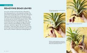 Air Plants How And When To Water Air Plants U2014 Timber Press