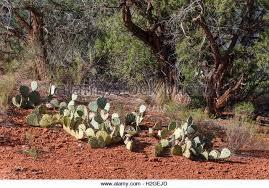 Arizona vegetaion images Tree sedona arizona az stock photos tree sedona arizona az stock jpg