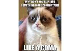 Grumpy Cat Meme Images - 31 great grumpy cat memes that will make you less grumpy snappy