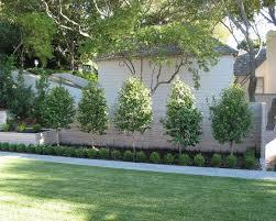 garden ideas along fence line interior design
