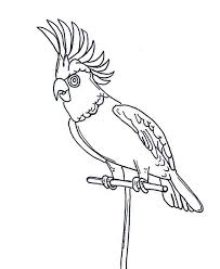 parrots coloring pages awesome parrot coloring page awesome parrot coloring page u2013 color