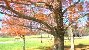 scammers try to buy trees for thousands less than they re worth wrsp
