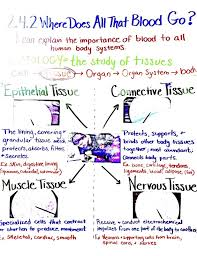 high school stuff 17 best biology images on anchor charts chemistry and