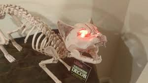 animated skeleton cat with lighted eyes halloween decoration youtube
