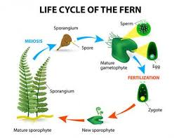 how do non flowering plants reproduce