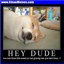 Best Memes 2014 - weeds near fence clean memes the best the most online