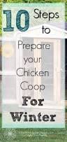 Best Laying Hens For Backyard Best 25 Hens Ideas On Pinterest Chicken Breeds Chicken Animal