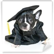dog graduation cap and gown graduation cap wall mural pixers we live to change
