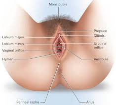 pilonidal cyst location vaginal pimples causes of pimple in or near vaginal area on