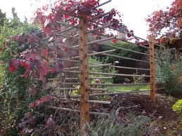 danger garden a fence that doubles as a grape arbor