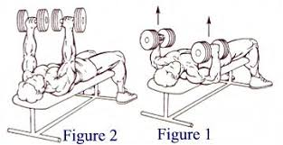 Incline Dumbell Bench Press Execises For The Chest Muscles And Assorted List Of Exercises For