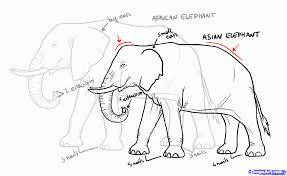 drawing elephant step by step images for u003e drawing of elephant for